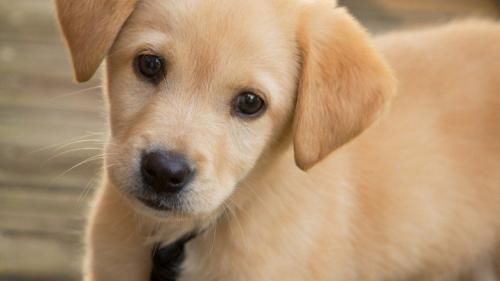 Veterinary sector